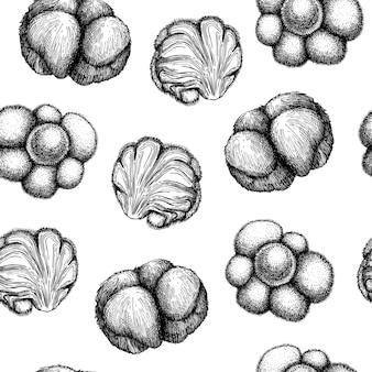 Illustrazione abbozzata a mano di funghi adattogeni