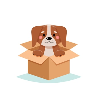 Adotta un animale domestico - simpatico cane in una scatola, su sfondo bianco
