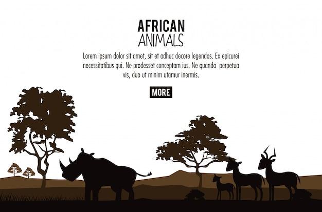 Concetto di animali africani