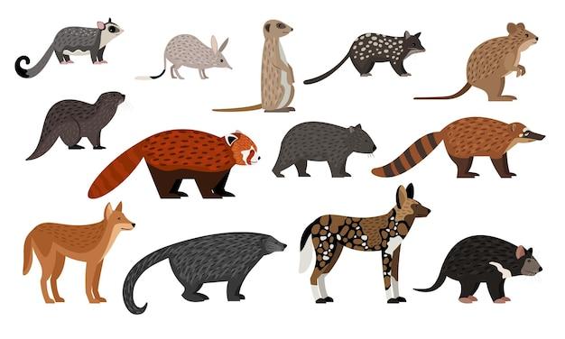 Animali africani impostati. aliante dello zucchero del fumetto, creature dello zoo di bilby quoll quokka lontra panda rosso binturong coati dingo, collezione di personaggi della fauna selvatica isolata