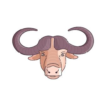 Testa di bufalo africano.