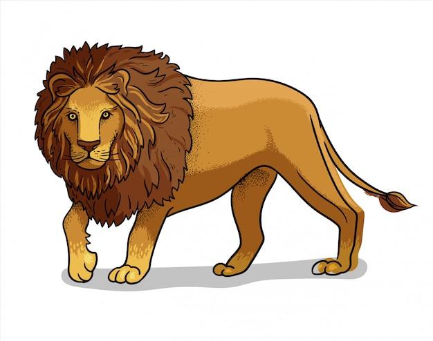 Leone maschio diritto della savana africana isolato nello stile del fumetto. illustrazione educativa di zoologia, immagine del libro da colorare.