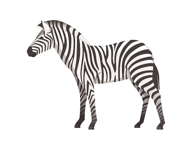 Zebra africana vista laterale cartoon design animale piatto illustrazione vettoriale isolati su sfondo bianco.