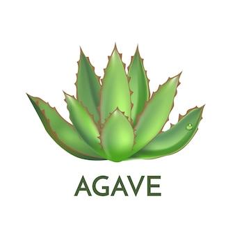 Agave pianta fiore verde logo colorato illustrazione vettoriale, set di simboli