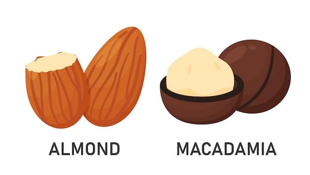 Semi di mandorle e macadamia legumi che forniscono alta energia per gli amanti della salute. isolato su una terra bianca.