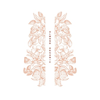 Cornice di noci di mandorle arte botanica disegnata a mano dadi foglie fiore