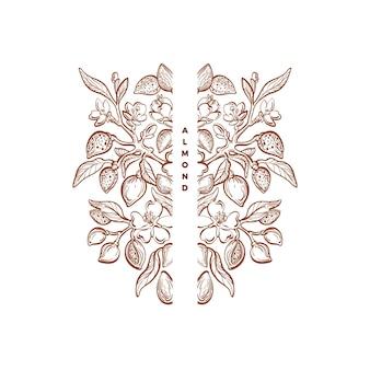 Ornamento di noci di mandorle cornice d'epoca grafica simbolo floreale foglie di schizzo di piante di natura vettoriale