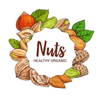 Schizzo di mandorle, arachidi, noci e pistacchi