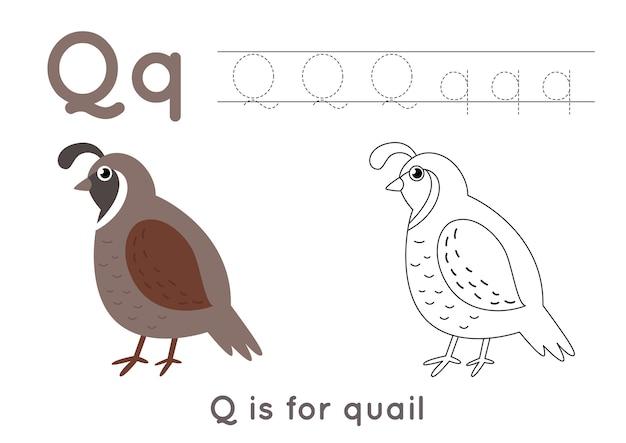 Pagina da colorare di alfabeto per bambini. attività di scrittura di base. tracciare il foglio di lavoro delle lettere abc. lettera q con carine quaglia.