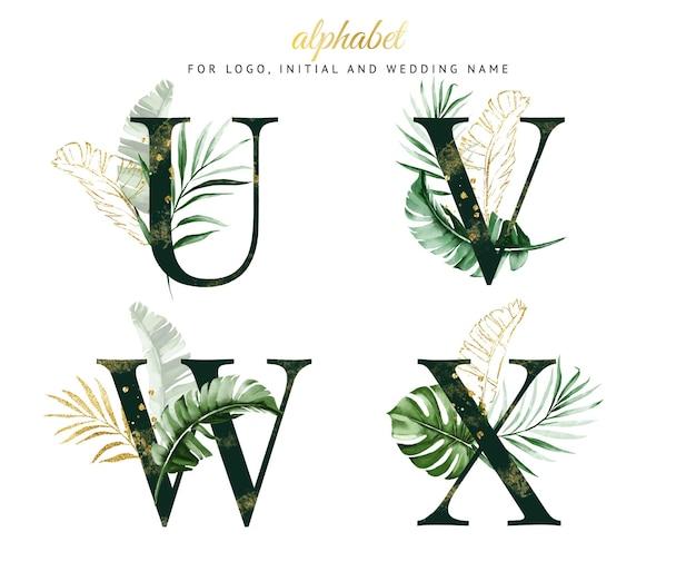 Set di alfabeto di u, v, w, x con acquerello tropicale verde. per logo, carte, branding, ecc