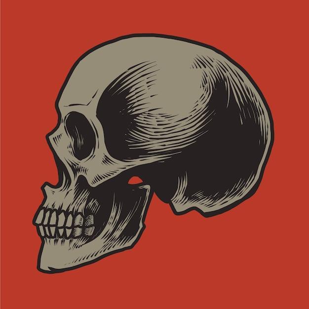 Cranio umano dettagliato anatomico isolato su colore rosso