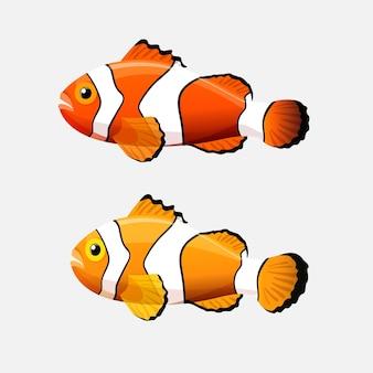 Pesce di anemone isolato su bianco. i pesci pagliaccio o anemonefish sono pesci il cui habitat di solito è una barriera corallina. specie di colore giallo e arancione con barre o macchie bianche. acquario. illustrazione