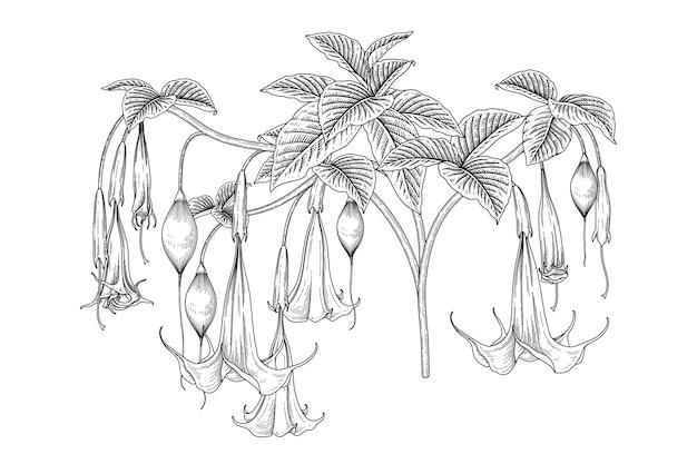 Disegni del fiore della tromba di angelo (brugmansia).