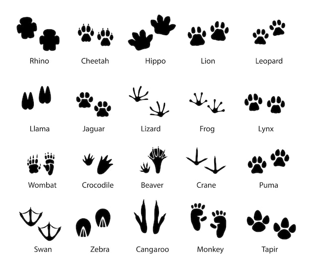 Tracce di zampe di animali e uccelli