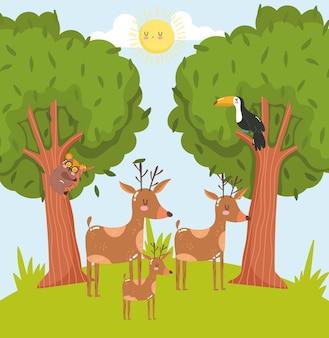 Cartone animato di animali cervi tucano foresta