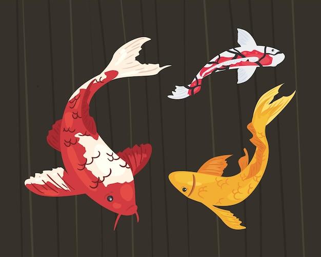 Animali pesci koi