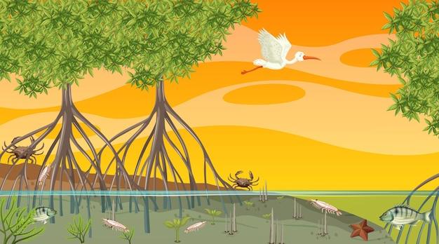 Gli animali vivono nella foresta di mangrovie alla scena del tramonto