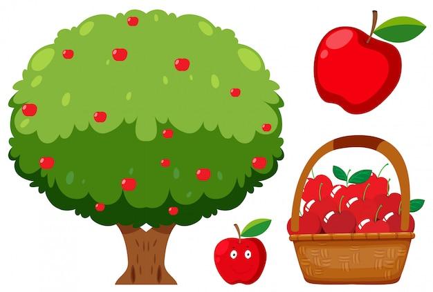Melo e mela su sfondo bianco