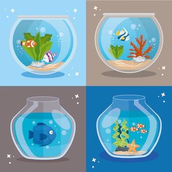 Acquari pesci con acqua, acquari animali domestici marini