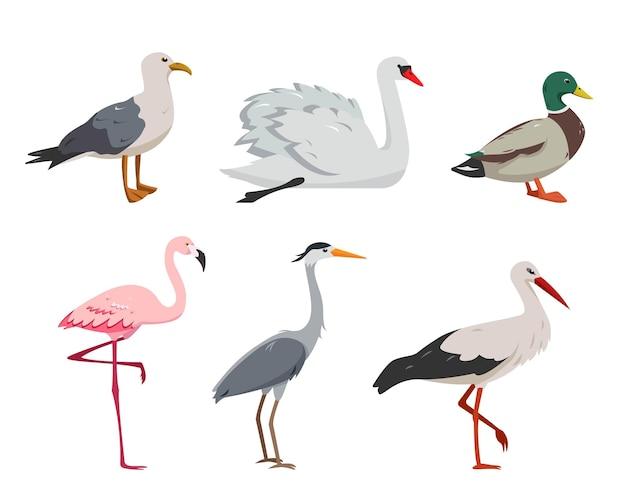 Uccelli acquatici e acquatici in diverse pose.