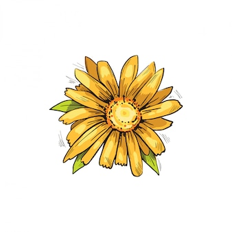 Illustrazione di vettore del fiore giallo di arnica. fiori che sbocciano e foglie verdi.bucculatrix arnicella