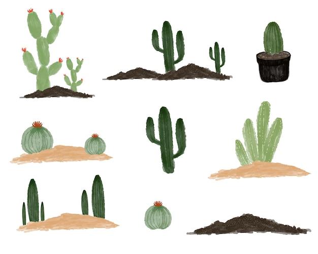 Disposizione della collezione di cactus