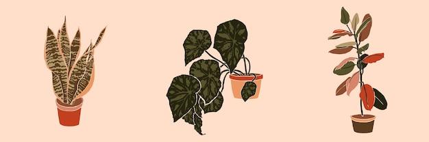 Piante d'appartamento in vaso collage d'arte in uno stile minimal alla moda. silhouette di sansevieria, begonia e piante di ficus in uno stile astratto semplice contemporaneo su uno sfondo rosa. illustrazione vettoriale a mano libera