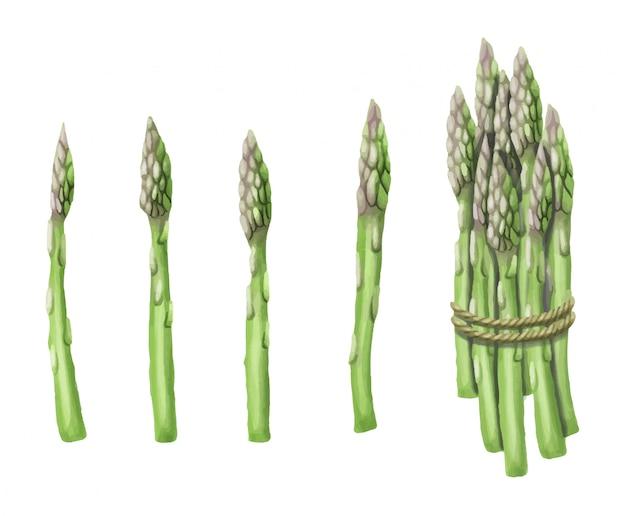 Disegnato a mano degli asparagi isolato