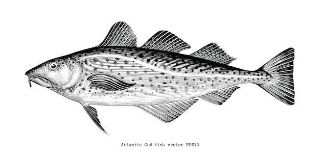 Illustrazione d'incisione d'annata del disegno della mano del merluzzo bianco