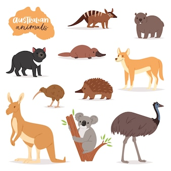 Animali australiani vector carattere animalesco in fauna selvatica australia canguro koala e ornitorinco illustrazione set di cartone animato selvaggio wombat ed emu isolato