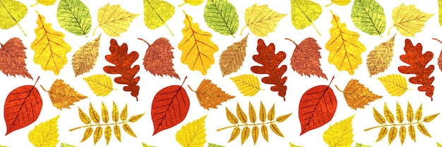 Sfondo autunnale di foglie, disegno vettoriale, banner