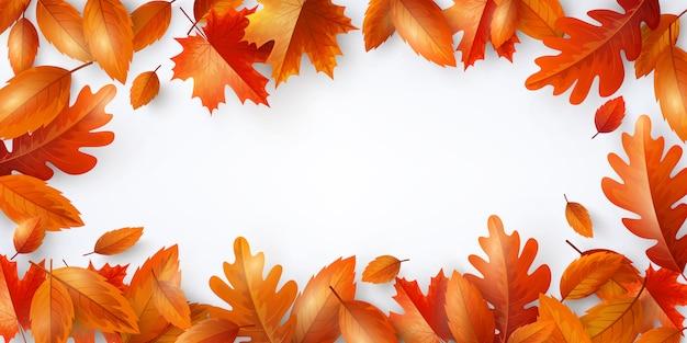 Sfondo autunnale, poster e modello di banner con acero colorato e foglie di autunno di quercia.