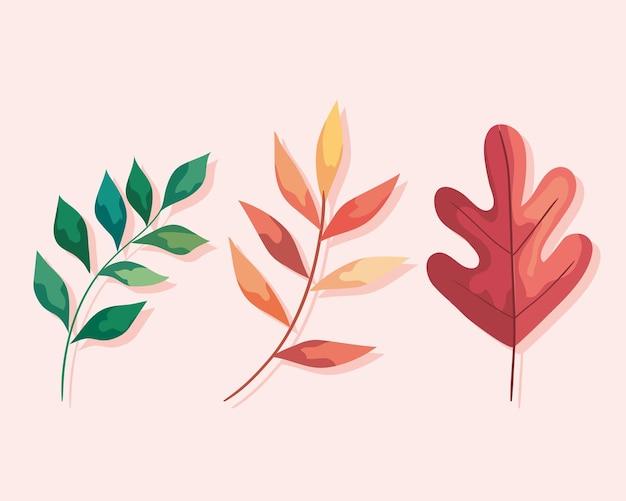 Ramo di autunno con foglie piante fogliame icona illustrazione