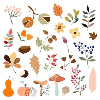 Collezione autunnale con botaniche diverse piante e foglie funghi zucche bacche