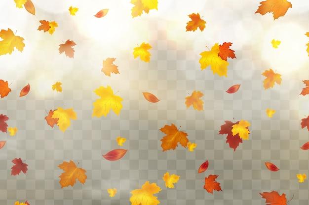 Autunno che cade foglie rosse, gialle, arancioni, marroni su sfondo trasparente.