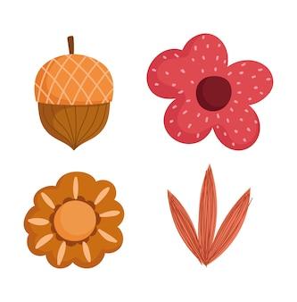 Fondo bianco delle icone della decorazione del fliage della ghianda del fiore di autunno