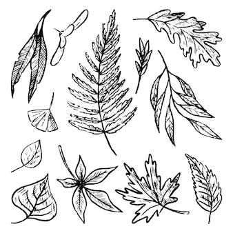 Insieme di scarabocchi di foglie d'autunno. illustrazioni disegnate a mano di vettore semplice. raccolta di disegni di fogliame realistici isolati su bianco. schizzi di contorno neri per il design.