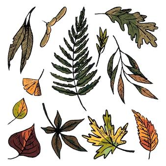 Insieme di scarabocchi di foglie d'autunno. illustrazioni disegnate a mano di vettore semplice. raccolta di disegni di fogliame realistici isolati su bianco. schizzi di inchiostro colorato per il design