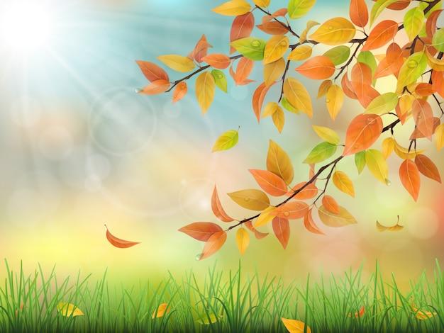 Foglie di autunno erba e gocce