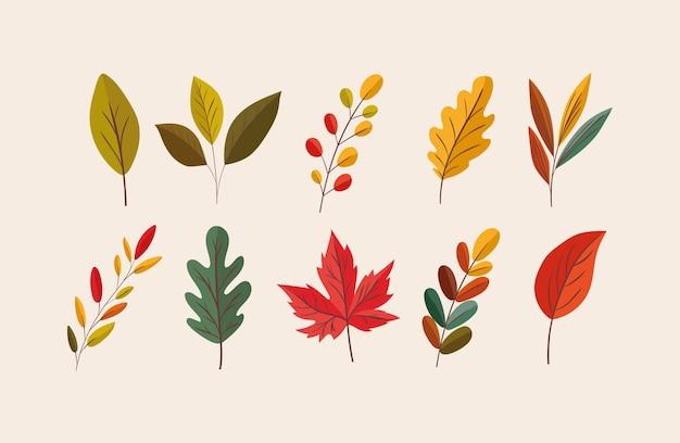 Set di icone di foglie di autunno, decorazione del giardino di ornamento della natura di stagione e tema botanico