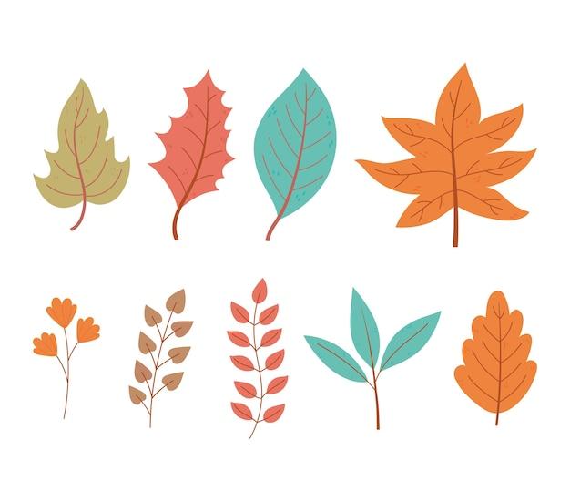 Insieme dell'icona della natura del fogliame del ramo di acero delle foglie di autunno