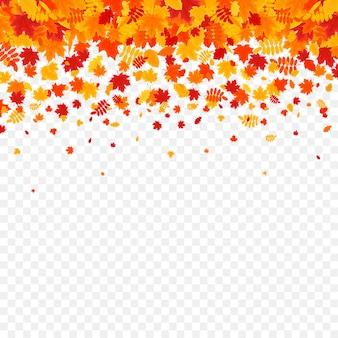 Foglie di autunno su sfondo trasparente.