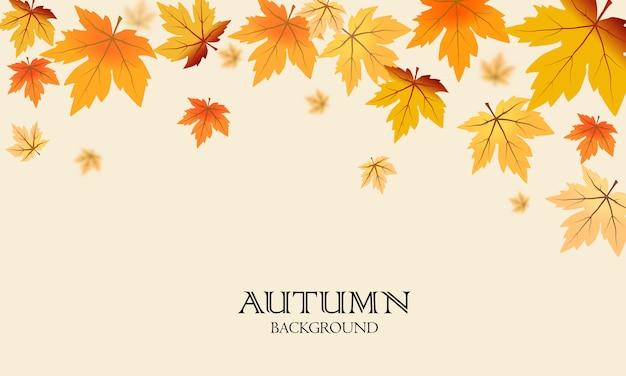Autunno foglie di acero sfondo
