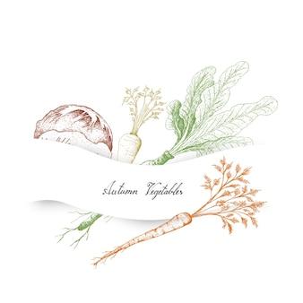 Autumn vegetables of radicchio
