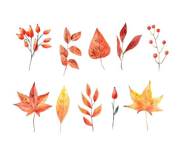 Foglie autunnali acquerello ed elementi floreali