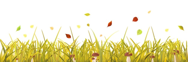 Erba gialla d'autunno, funghi e foglie su sfondo bianco
