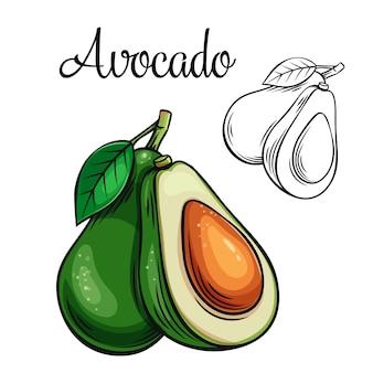 Icona di disegno di avocado
