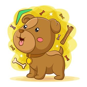 Cucciolo di cane che gioca con le ossa e il boomerang verde
