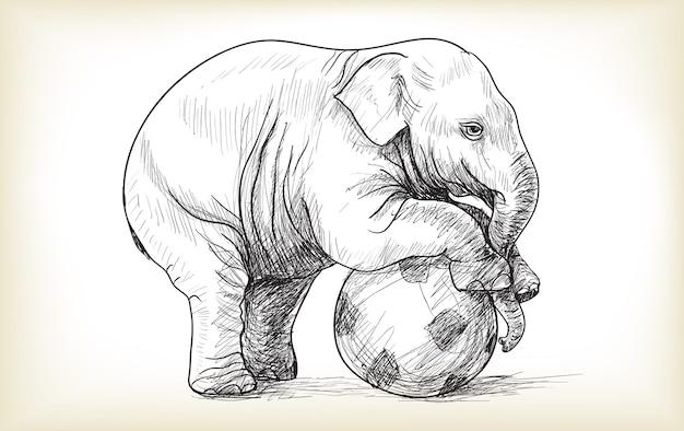 Elefantino che gioca a calcio schizzo e illustrazione vettoriale di tiraggio a mano libera
