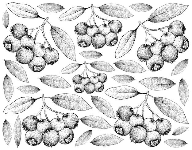 Sfondo di blue lilly pilly fruits
